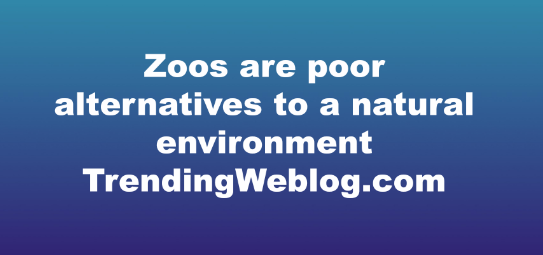 Zoos are poor alternatives to a natural environment
