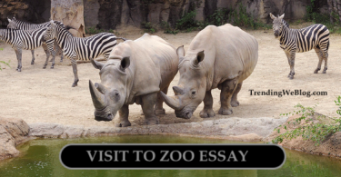Visit to Zoo Essay